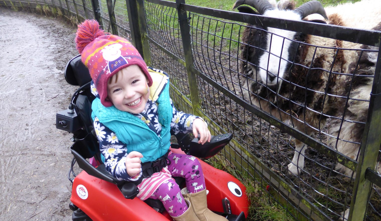 Little girl in her Wizzybug powered wheelchair with a sheep