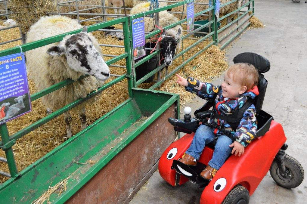 Noah looking at a sheep in his Wizzybug powered wheelchair